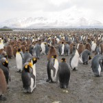The Wildlife and Beauty in Antarctica